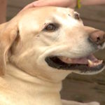 Miracle Dog Survives Being Hit By Train