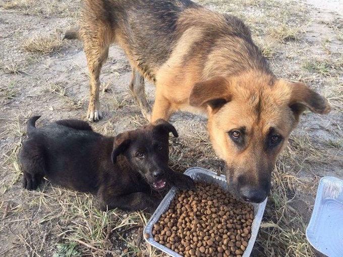 Redlands Dog Rescue