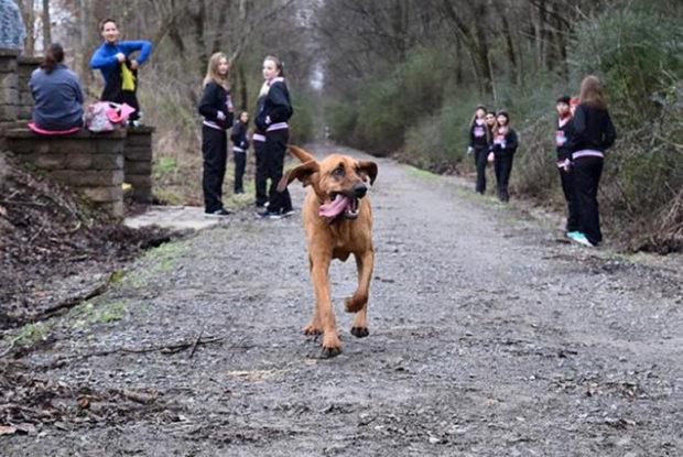 Hound Dog Half Story