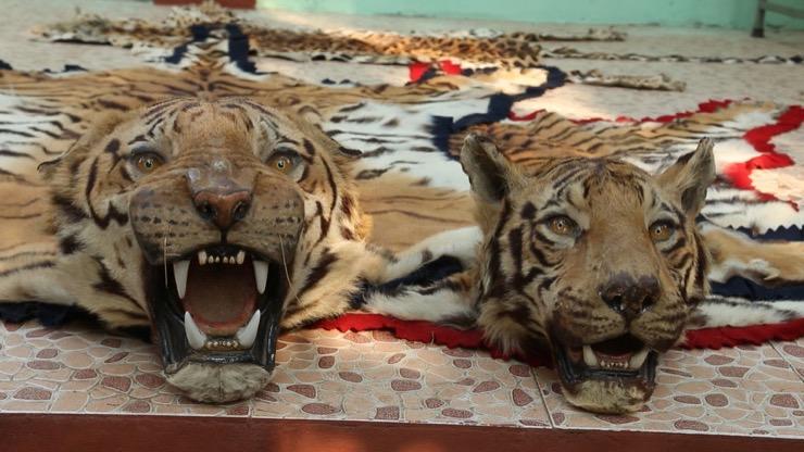 Kerala Tiger Revenge Story