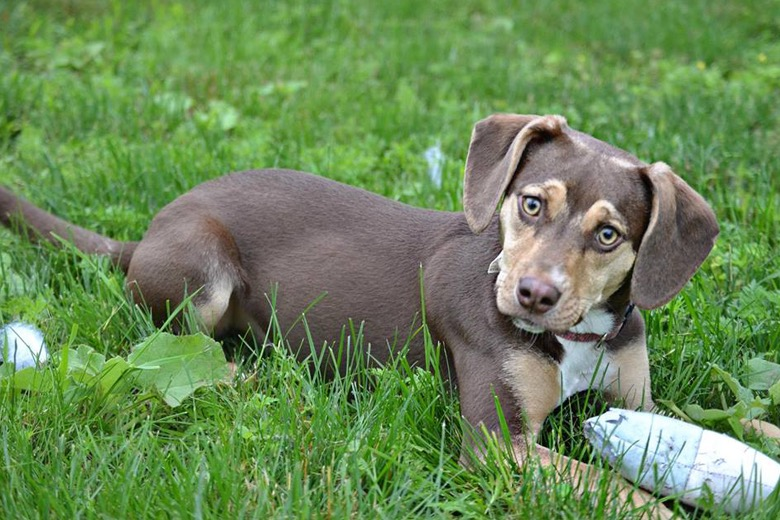 Delta Animal Shelter Story