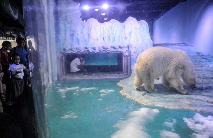 Pizza the Polar Bear Story
