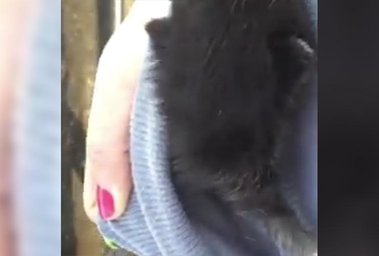 Pit Bull Baby Kitten Story