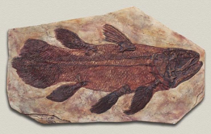 Coelacanths Threatened by Oil Spill Story