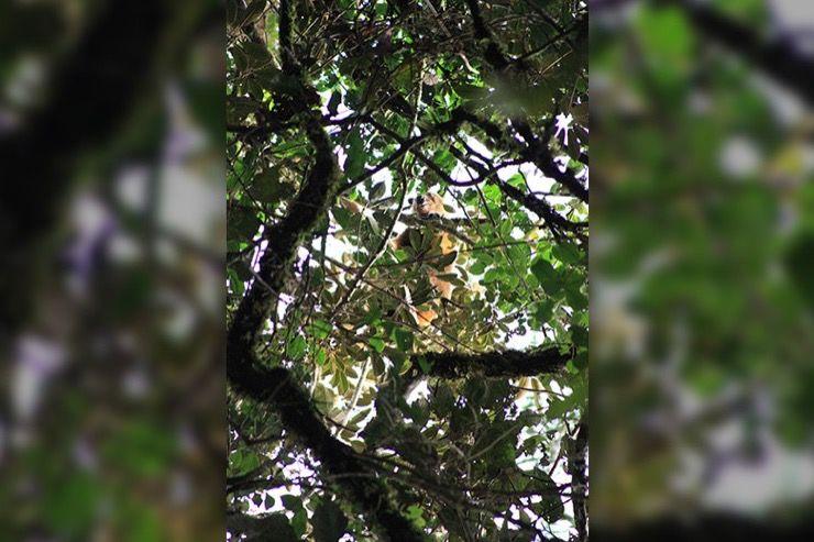 Wondiwoi Tree Kangaroo Story