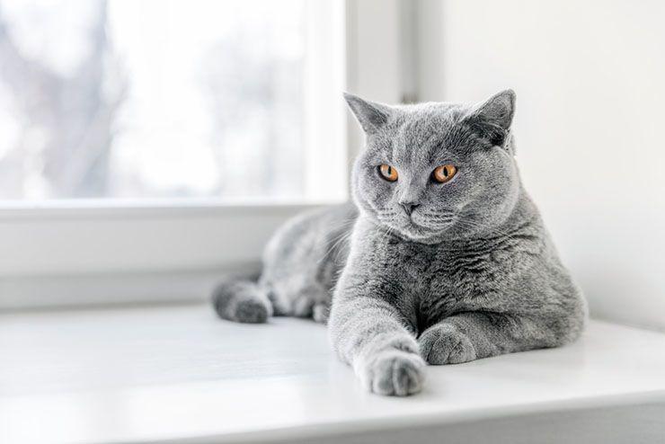 Antiallergische Katzen