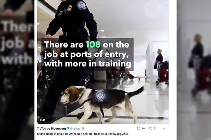 Airline Security Canine Story
