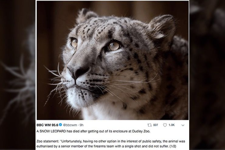 Snow Leopard Story