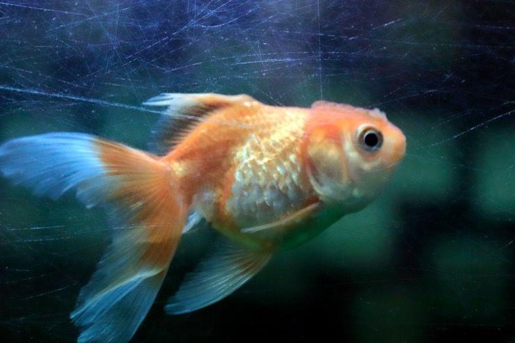 Missing Man Fish Tank Story