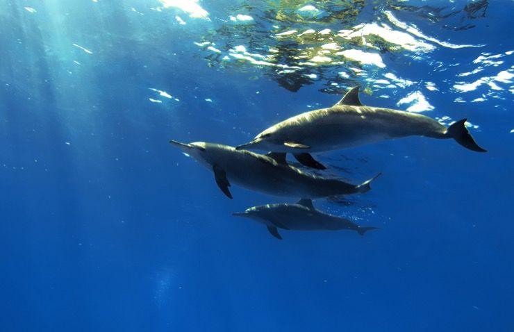 Dolphin Communication Story
