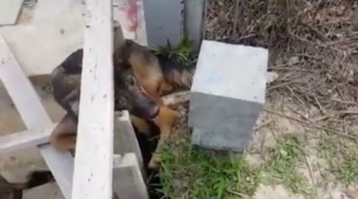 Trapped Dog Story