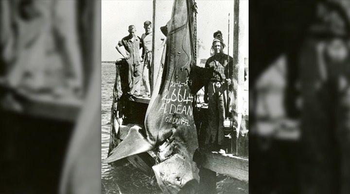 Record Blue Marlin Story