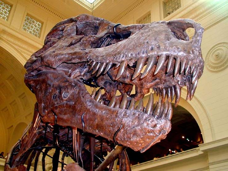 T-Rex Sue Discovery