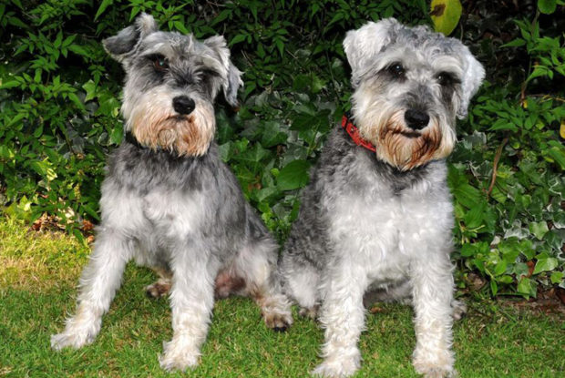 Missing Dogs Return After 96 Hours