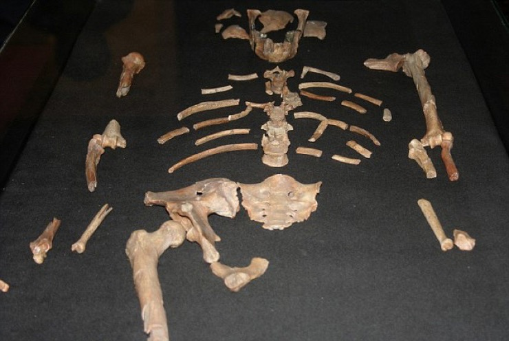 Oldest Human Fossil Story