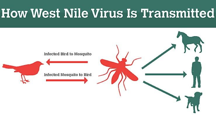 Prepare for West Nile Virus Story