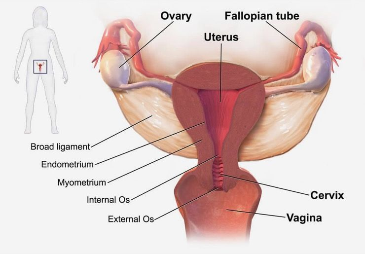 Endometriosis Symptoms Story