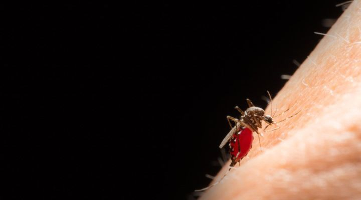 West Nile Virus Story