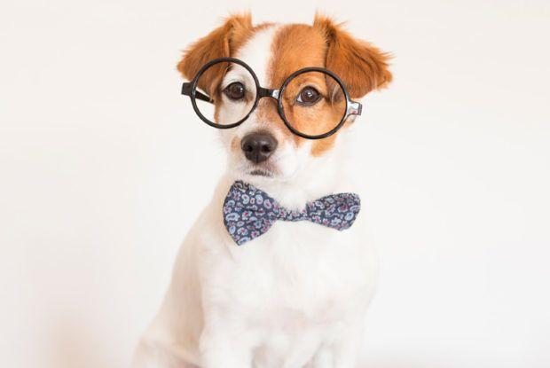 New Study Dog Story