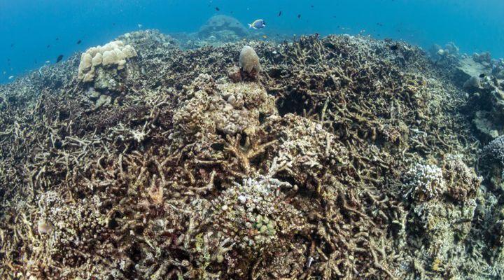 RangerBot Great Barrier Reef