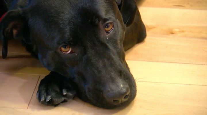 Heroic Dog Story